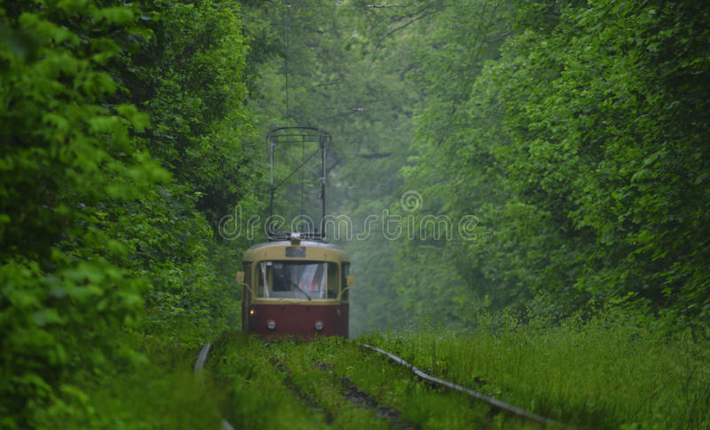 The red tram leaves the fog in the green forest. Among the dense greenery of the forest along the iron rails in the grass from the fog a red tram leaves royalty free stock photo