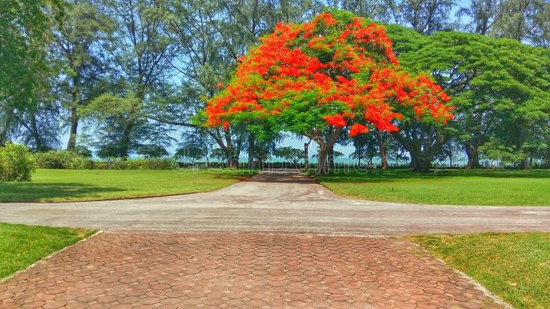 Red tree royalty free stock photos