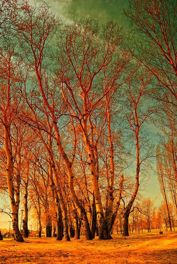 Download Red trees stock image. Image of landscape, sunset, golden - 9387125