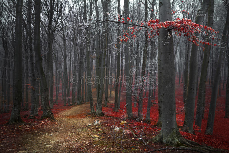 Red trees in the forest stock image