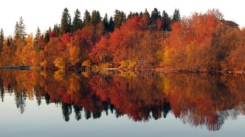 Red trees reflection in the mirror lake stock photos