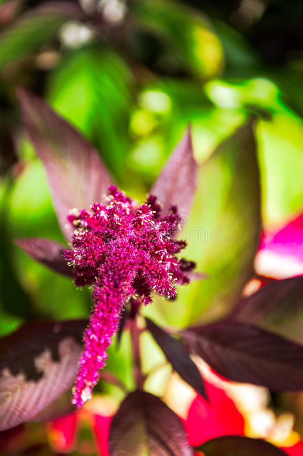 Red tropical flower in a garden in Guatemala stock photo