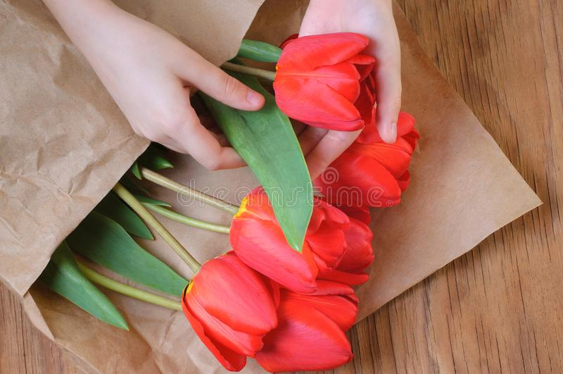 Red tulip bouquet in children`s hands. Spring flowers. Mother`s royalty free stock photo