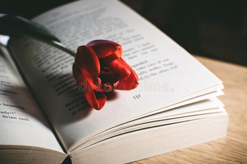 Red Tulip Flower On Book Page stock photos