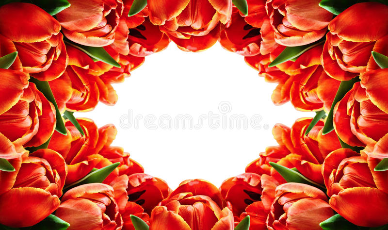 Download Red Tulip Flowers Horizontal Frame Stock Image - Image: 71728935
