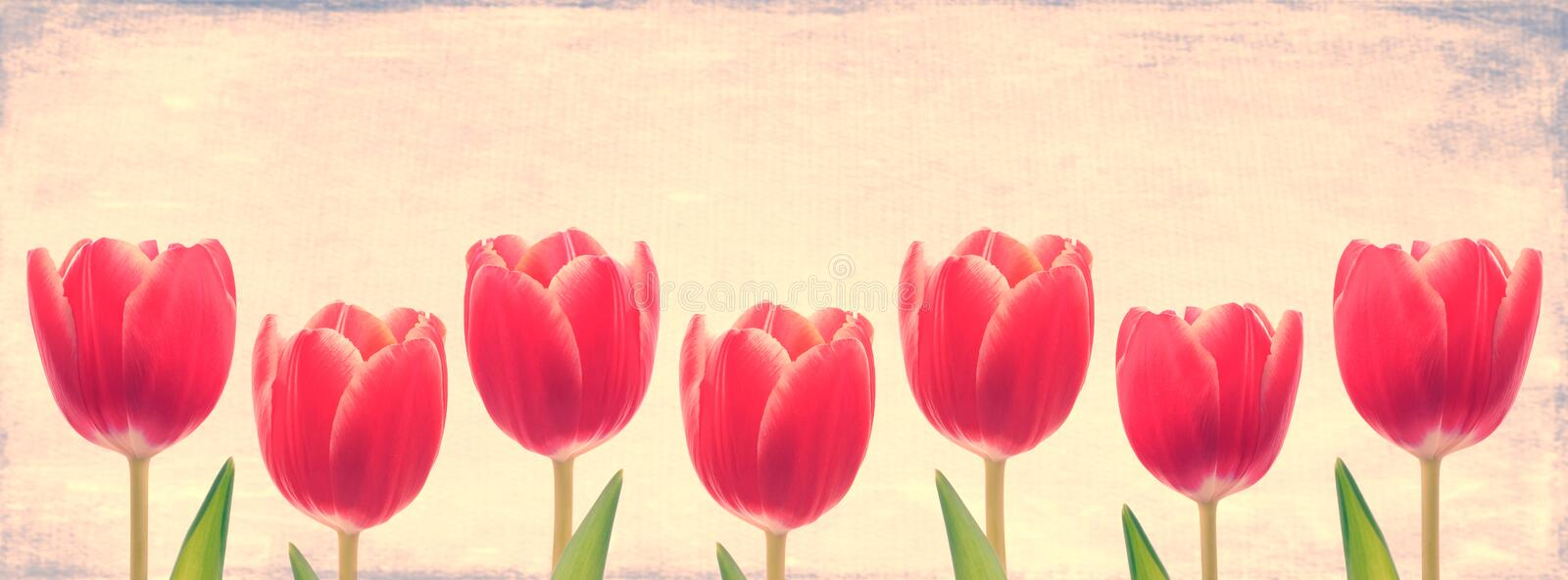 Download Red Tulip Row stock photo. Image of group, easter, flowers - 30509024