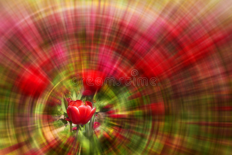 Download Red Tulip With Zoom Background Stock Photo - Image: 11037926