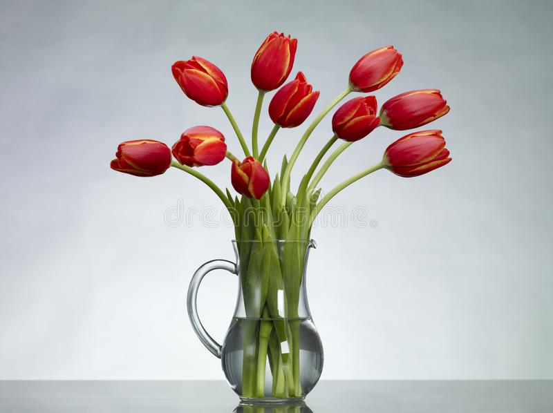 Download Red Tulips stock photo. Image of background, nature, water - 17761808