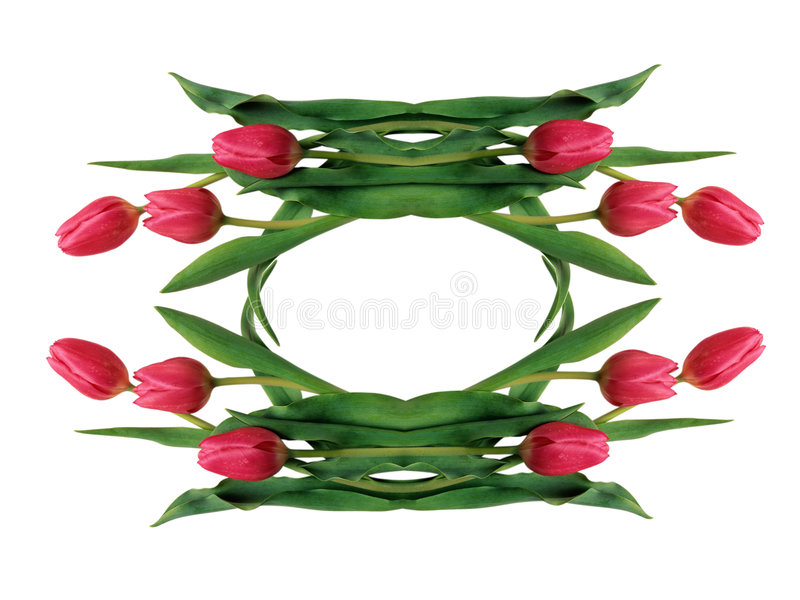 Download Red Tulips Stock Photos - Image: 7667393