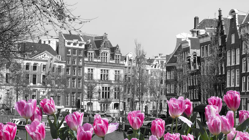 Red tulips in amsterdam stock photos