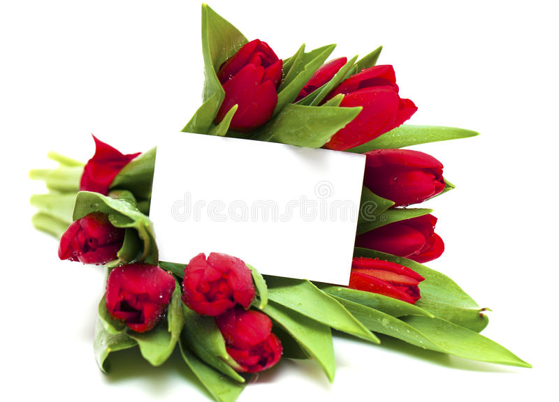 Red tulips and blank card royalty free stock photos
