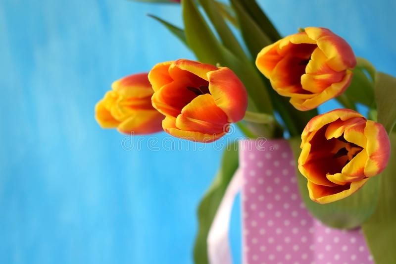 Red tulips on blue background stock photography