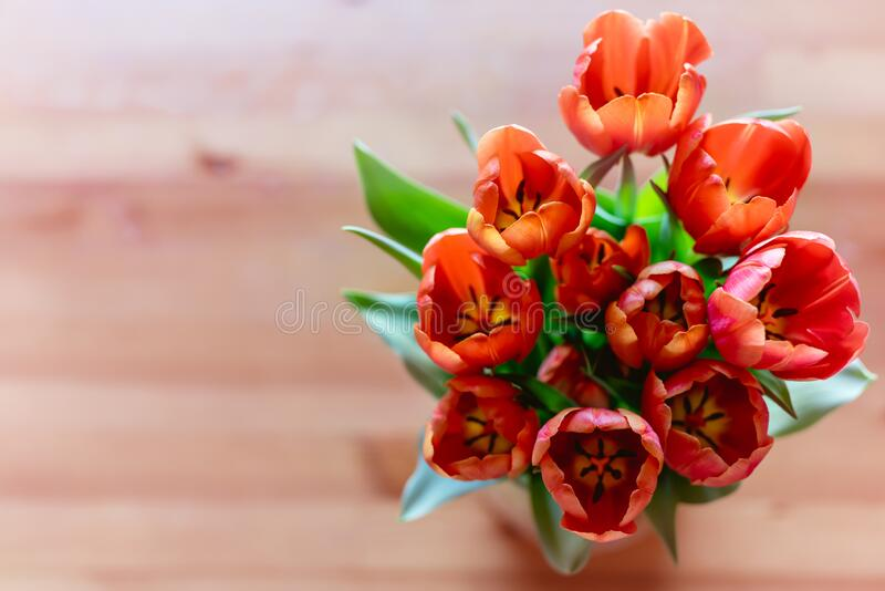 Red tulips bouquet close up on a wooden background stock image