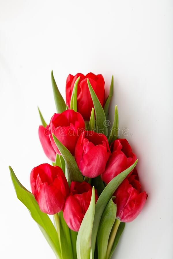 Red tulips bouquet isolated on white background royalty free stock photography