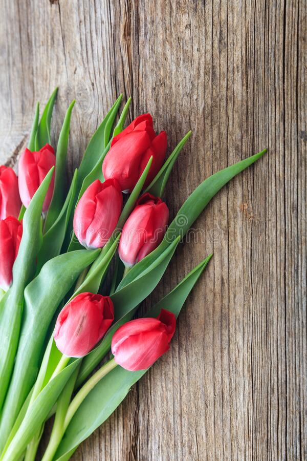 Red tulips bouquet isolated on wooden background royalty free stock photo