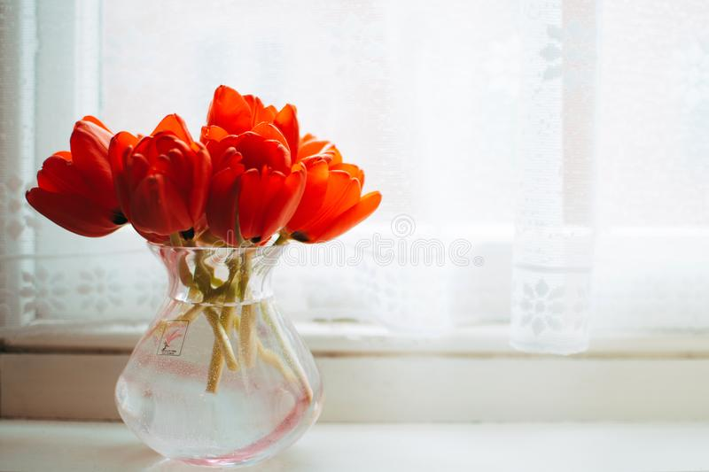 Red Tulips in Clear Glass Vase With Water Centerpiece Near White Curtain stock images