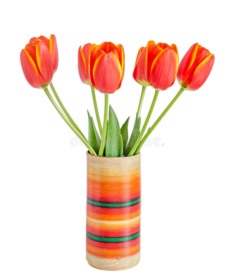 Red tulips flowers with yellow stripes, colored flowerpot, vase, green leaves, close up, isolated on white background. stock photography