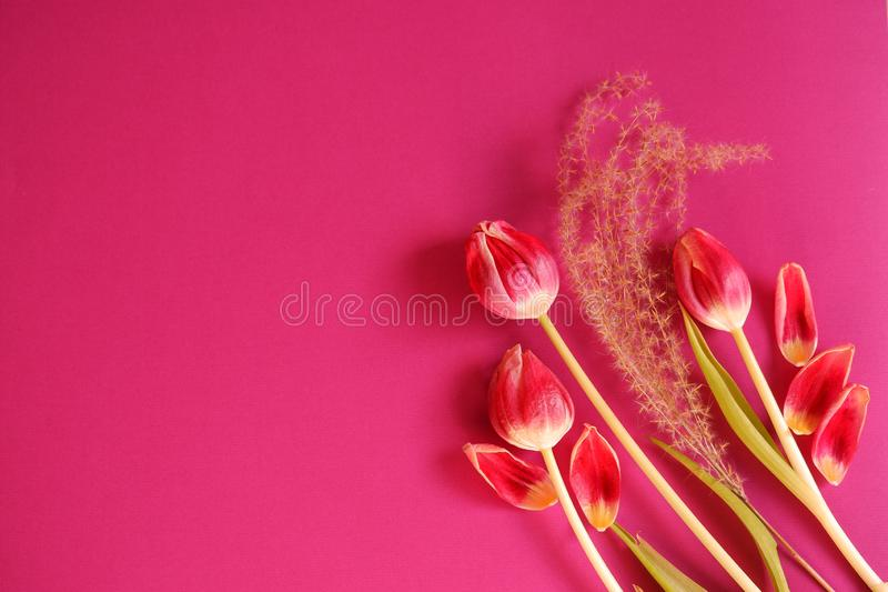 Red tulips fluffy plant pink background top view. Beautiful red tulips leafs fluffy plant pink background top view tic fresh royalty free stock image