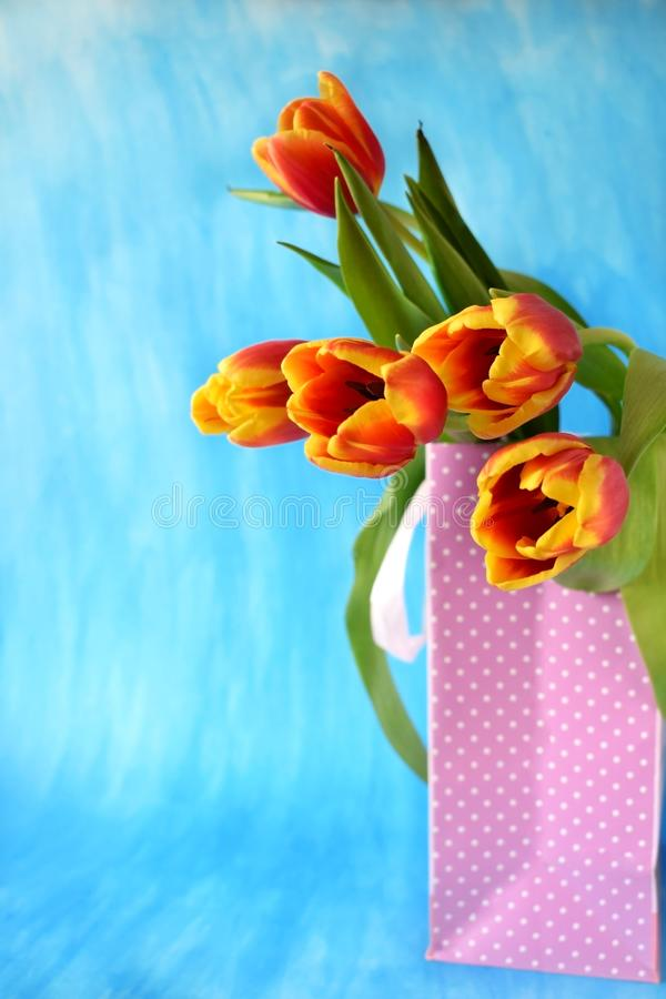 Red tulips in a present bag royalty free stock photography