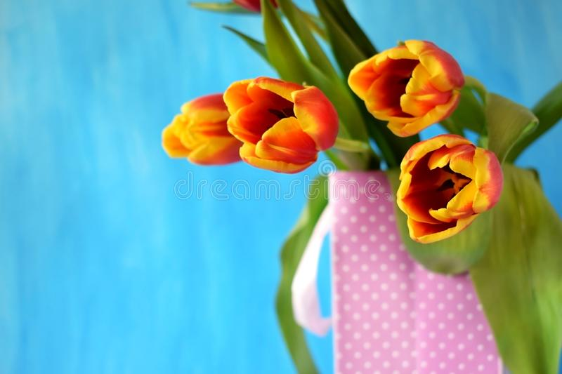 Red tulips in a present bag stock photography