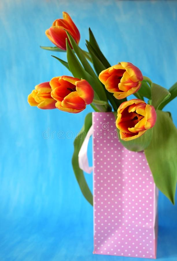 Red tulips in a present bag royalty free stock photos