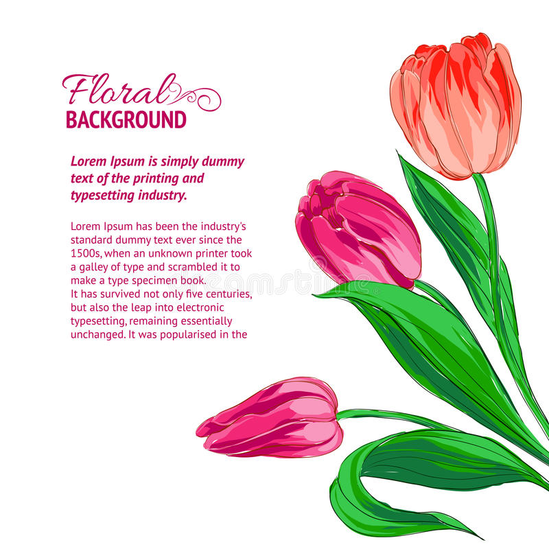 Red tulips and sample text. Vector illustration royalty free illustration