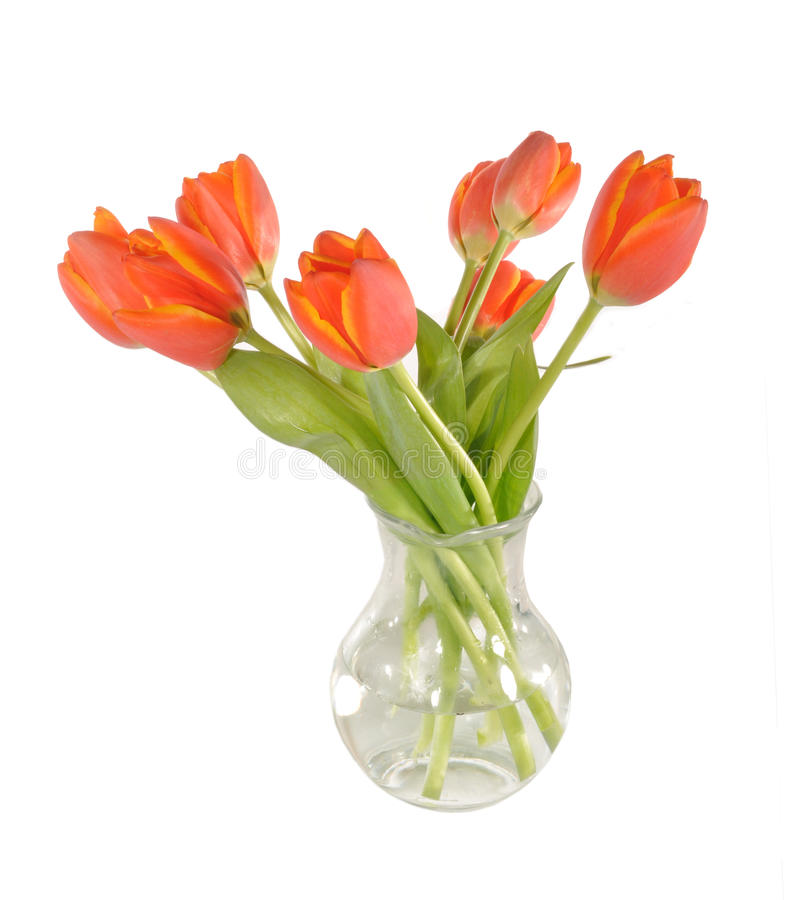 Download Red tulips in a  vase stock image. Image of water, flower - 23758369