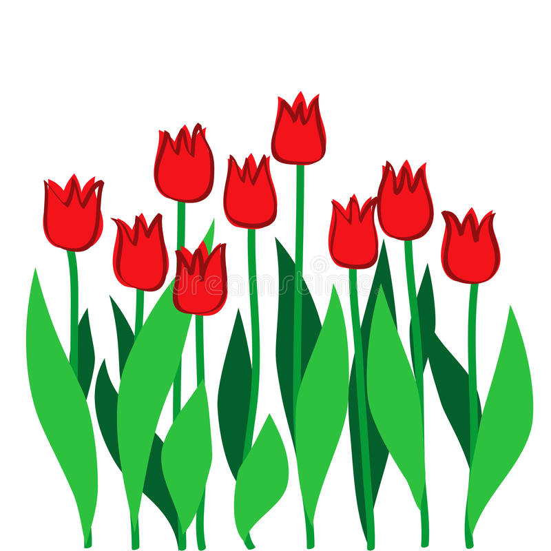 Red tulips stock illustration