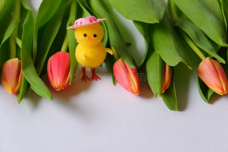 Red tulips white background toy chicken pink head. Red tulips white background toy standing chicken pink head spring eastern green leafs royalty free stock photography