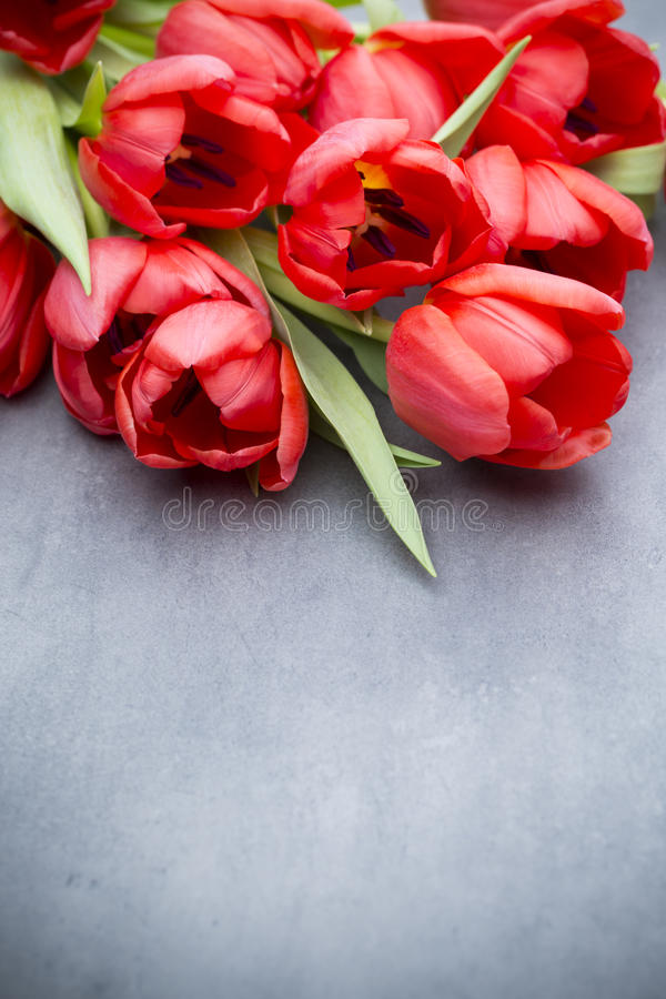 Red tulips on a wooden background. stock images