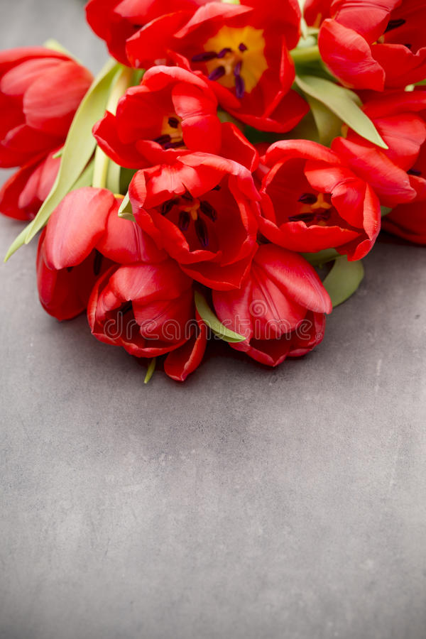 Red tulips on a wooden background. stock photography