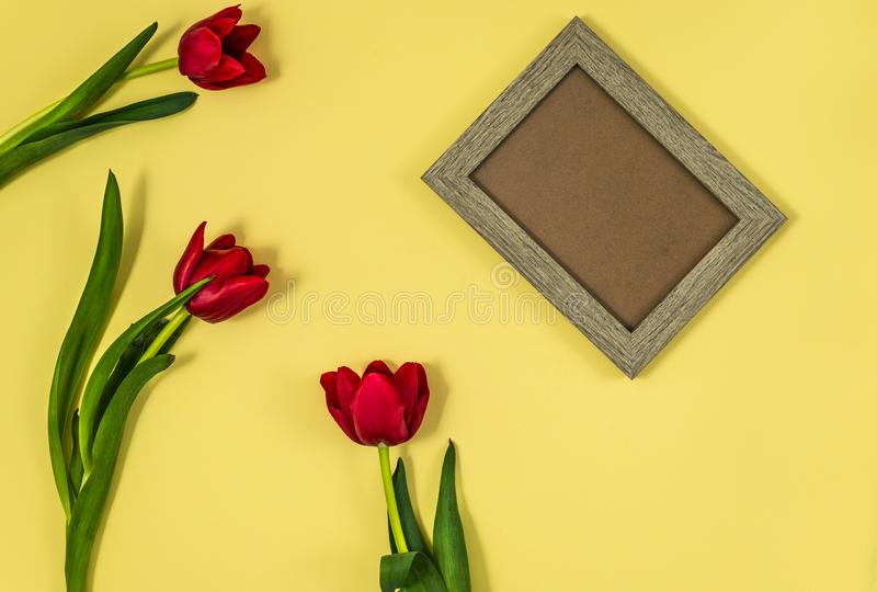 Red tulips with wooden frame o. N yellow background stock photos