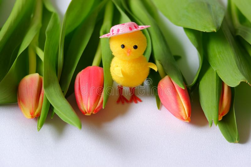 Red tulips yellow chicken standing green leafs pink head. Spring eastern white background stock images