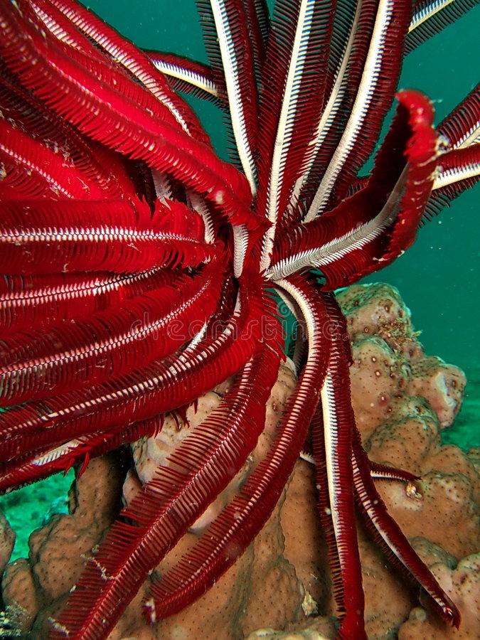 Download Red underwater plant stock photo. Image of wavy, bottom - 4639882