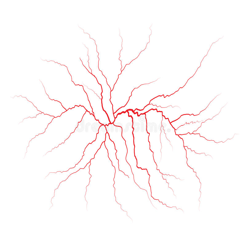 Red Veins Blood Vessels And Arteries Vector Illustration Stock