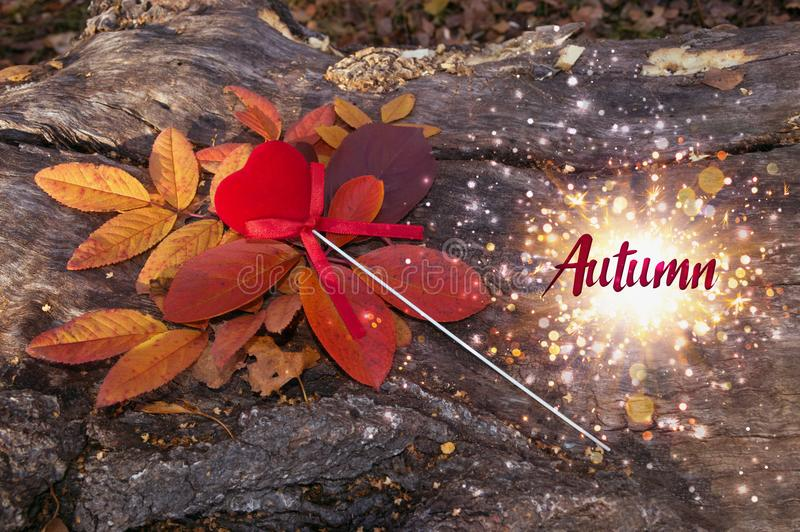 Red velvet heart in leaves with autumn sign in sparkles stock image