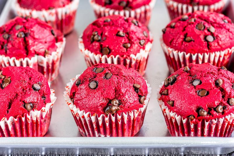 Red Velvet Muffins / Cupcakes on a Baking Tray Close Up Photo. royalty free stock photography
