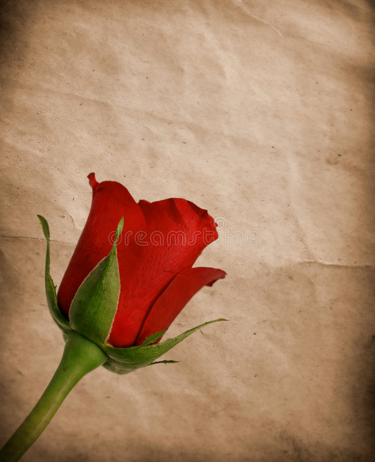 Free Red Vintage Rose Royalty Free Stock Photography - 4240997