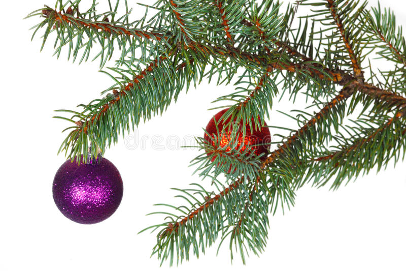 Download Red And Violet Balls On The Branch Of Christmas Tree Stock Image - Image of traditional, symbols: 36339193