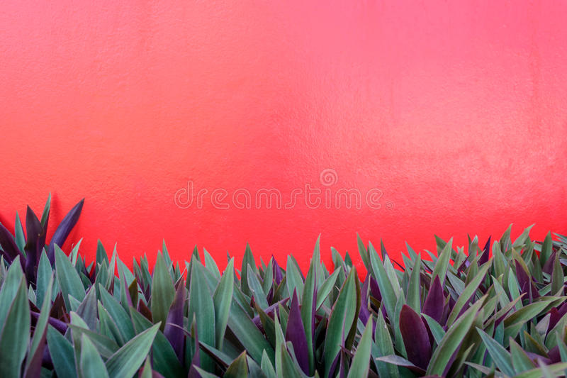 Red wall and plants. For use background stock images
