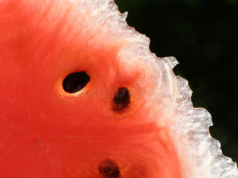 Red water melon stock images