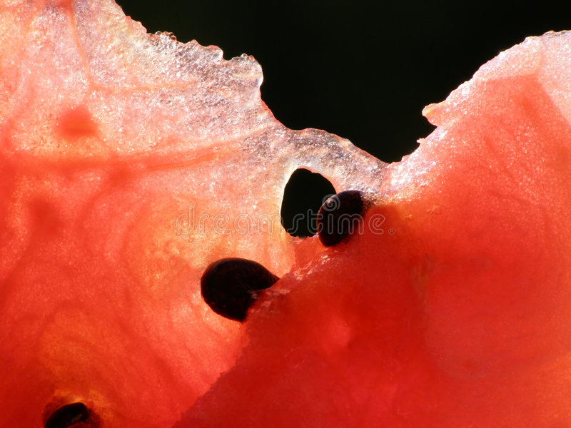 Red water melon royalty free stock image