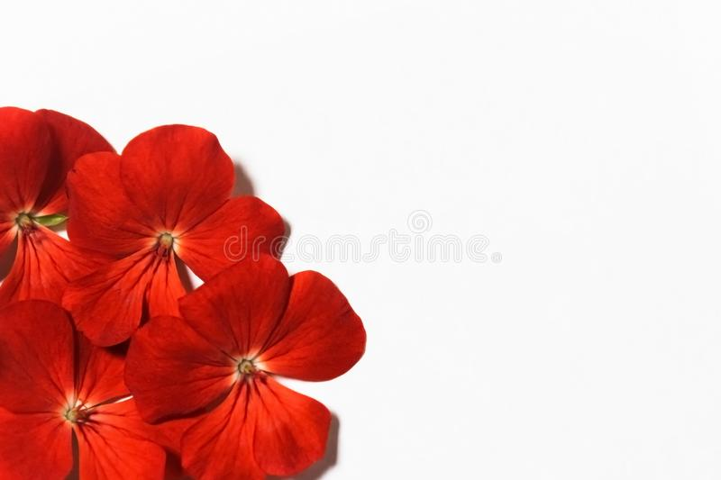 Red on white stock image