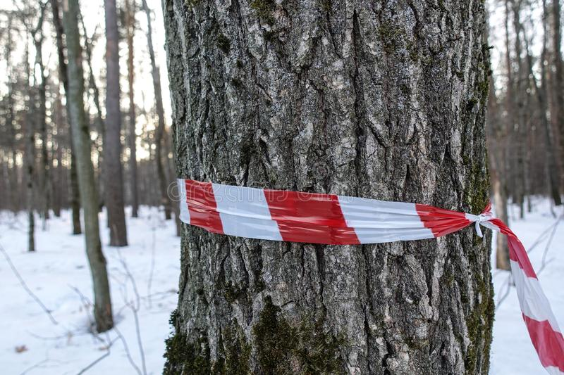 Red white banning tape. Red and white banner on a tree trunk stock photos