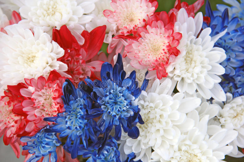 Red White Blue Chrysanthemum Flower Bouquet Stock Image - Image of ...