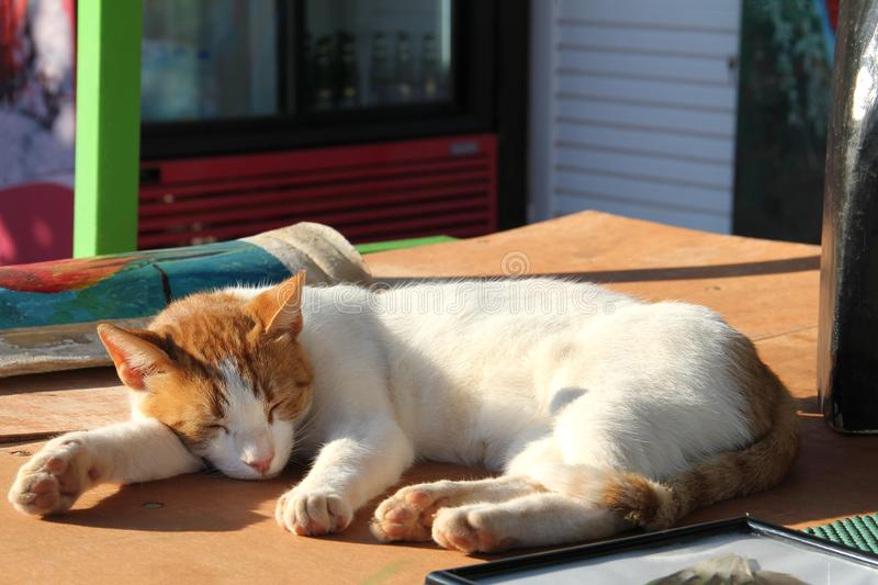 A red white cat lying on wooden table outdoor in the lazy early morning. Pet enjoying the sun. Ginger kitten sleeping, close up stock image