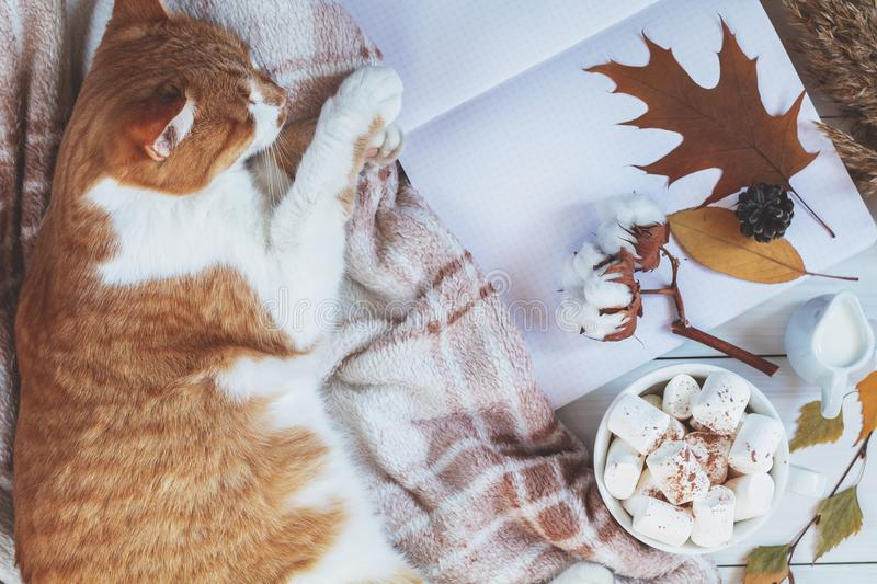 Red white cat on plaid, cup of coffee, cotton plant flower branches, notepad royalty free stock images