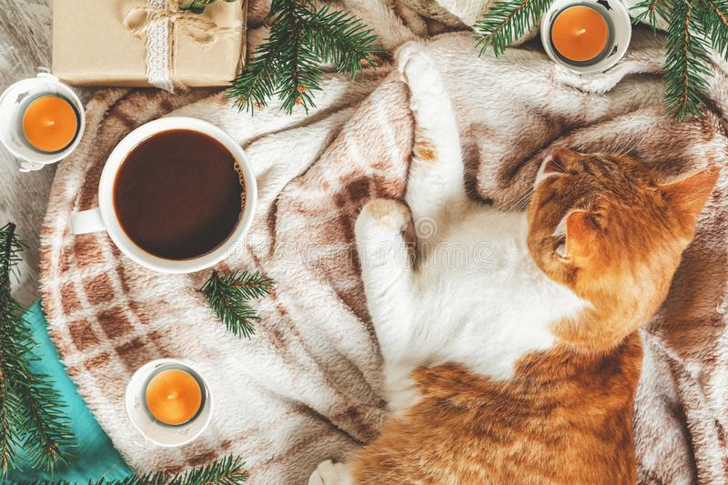 Red white cat on plaid, cup of coffee, spruce branches, gift, candles. Christmas and New Year, autumn winter beautiful background stock photo