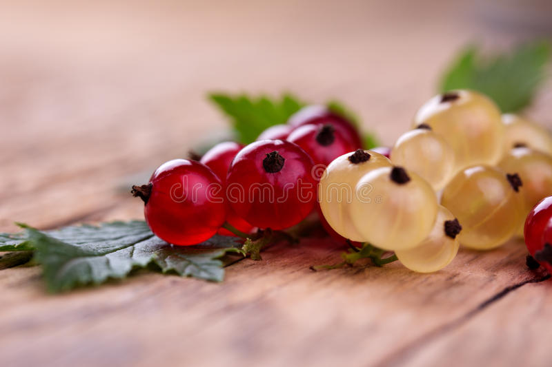 Red and white currant royalty free stock photo