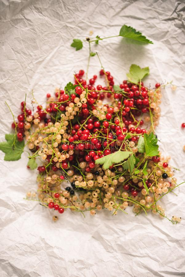 Red and white currants on a white paper stock photo